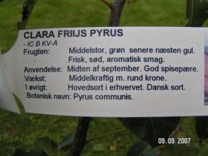 Clara Friis plante info
