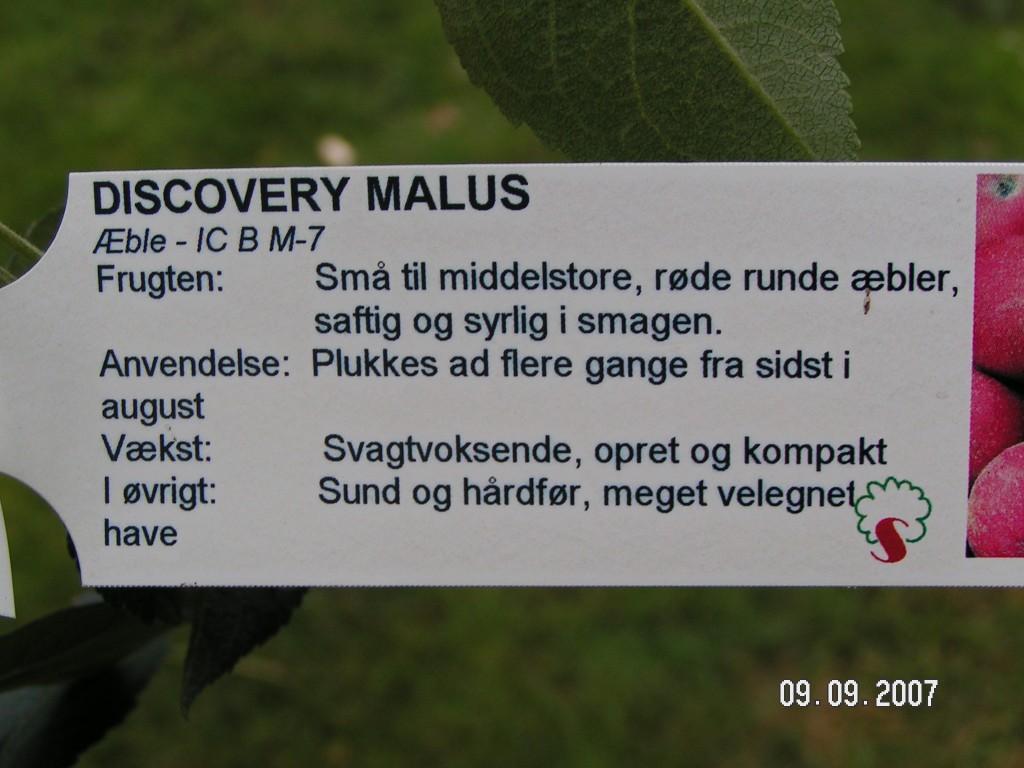 Discovery plante info