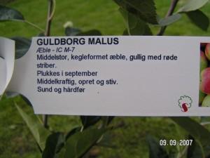 Guldborg plante info