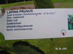 Lapins plante info