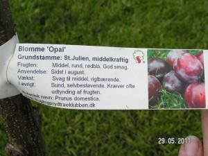 Opal plante info