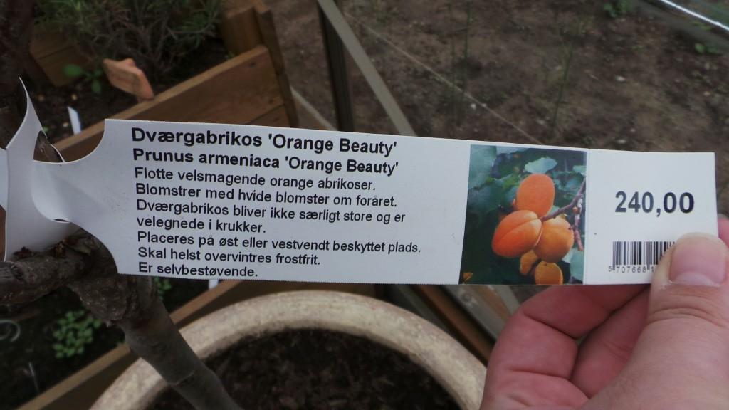Orange Beauty Plante Info