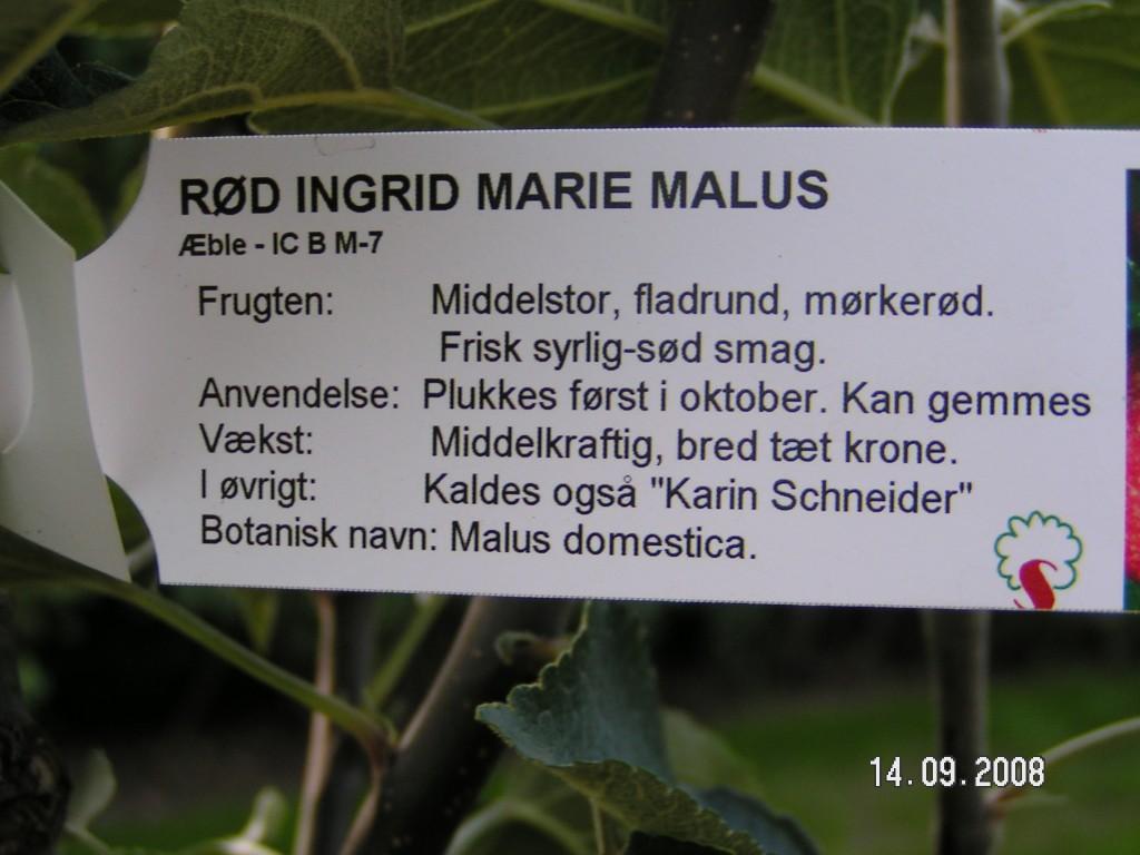 Rød Ingrid Marie info