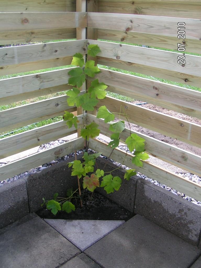 Schuyler frugttræ